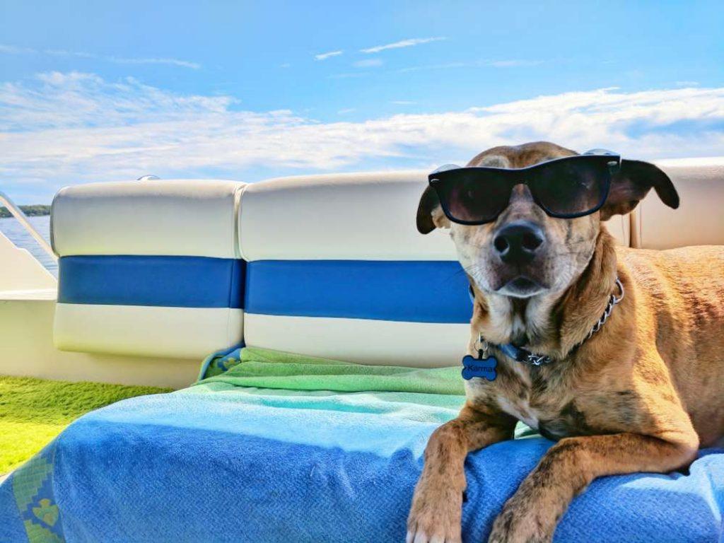 dog-cool-sunglasses-chill-lying-down