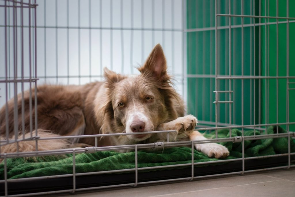 dog-crate-lying-down